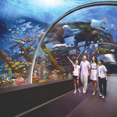 壁纸 海底 海底世界 海洋馆 水族馆 400_399